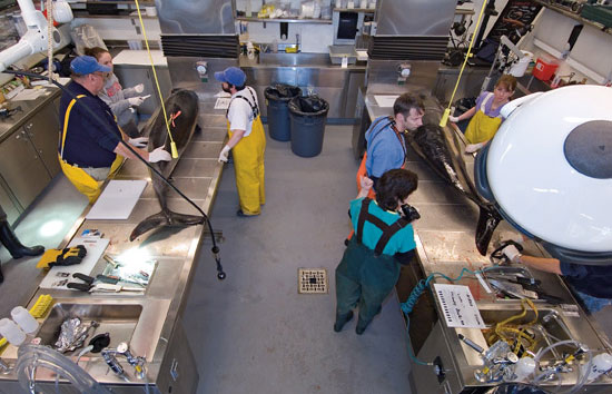 marine mammal laboratory at Woods Hole Oceanographic Institution