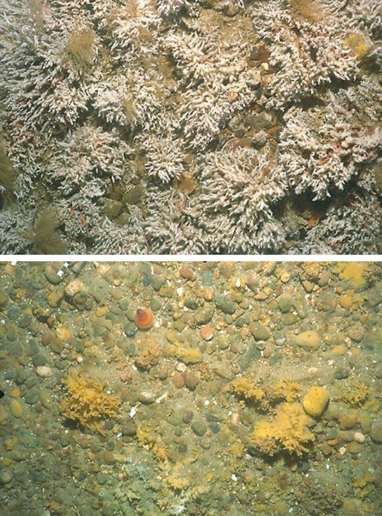 Do Marine Protected Areas Really Work? : Oceanus Magazine