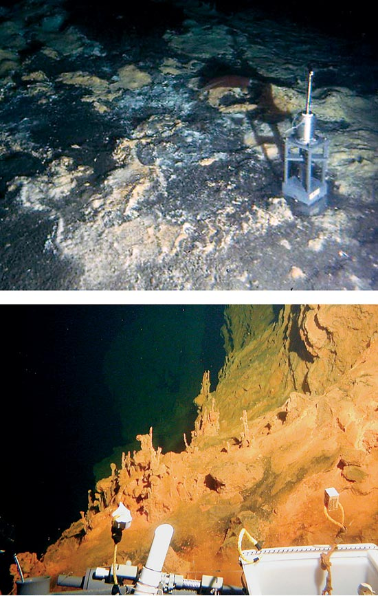 deep-sea microorganisms