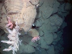 Long-armed, bright-colored starfish called Brisingids