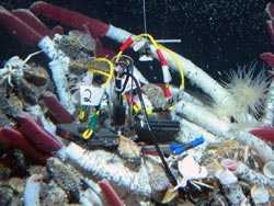 At the experiment site at the Tica Vent on the East Pacific Rise in 2004, basalt panels were placed in the center of a tubeworm colony.