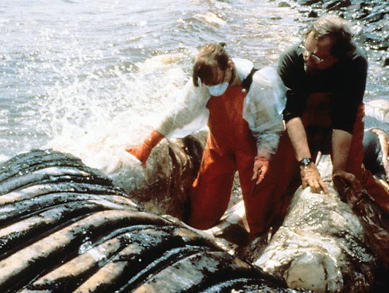 Wearing fisherman?s cold-water gear, Darlene Ketten (left) stands in the mouth of a stranded humpback whale towed ashore on a Newfoundland beach in 1998.