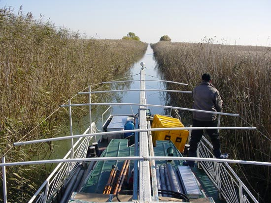 Researchers guide a boat through canals in the Danube Delta