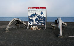 Welcome to Barrow, Alaska, where Inupiat people rely on the annual migration of bowhead whales to coastal waters.