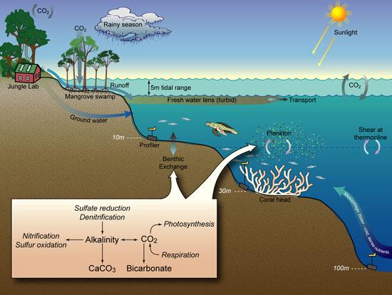 coastal ocean ecosystem