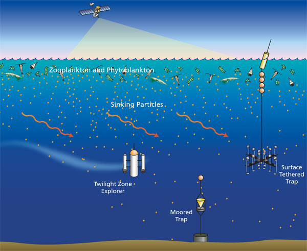 Particles sinking from sunlit surface waters through the ocean?s dimly lit twilight zone are swept sideways by currents.