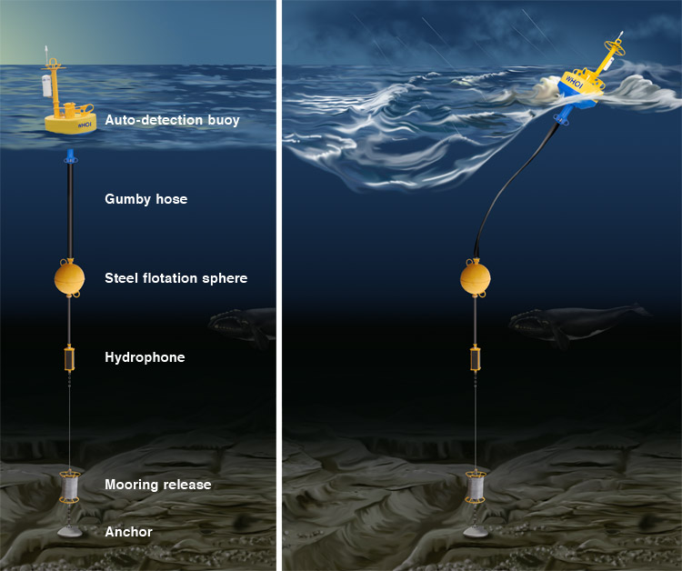 Buoys Help Avert Whale Ship Collisions Mmc