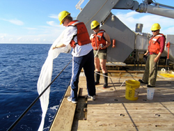 photo of Sonya Dyhrman and student Elizabeth Orchard collecting Trichodesmium in the Sargasso Sea