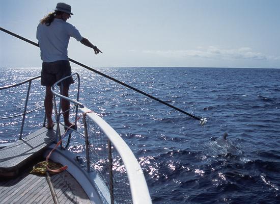 Mark Johnson tagging a whale