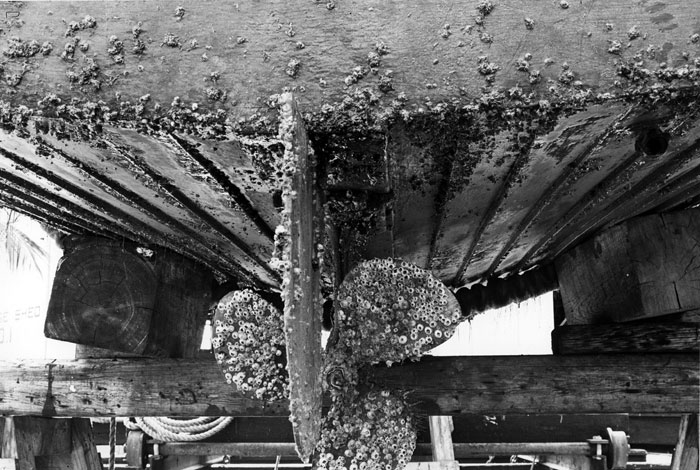 old ship hull with heavy encrustation of barnacles