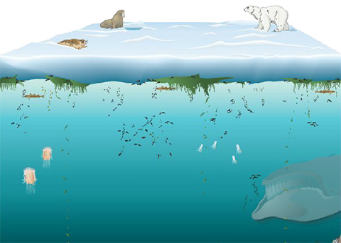 ocean ecosystem information Get more overfishing statistics here and see what can it far out-matches the ocean's ability to renew the number of interested in more facts like the the end.