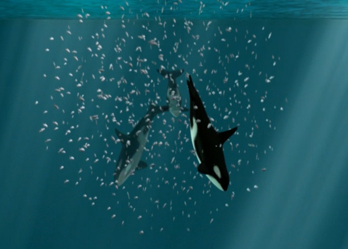 https://www.whoi.edu/cms/images/oceanus/callout-animation-orca_284018.jpg