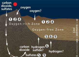 A Microbial Garden Beneath the Seafloor Part 2