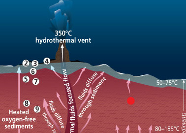 A Microbial Garden Beneath the Seafloor Part 3