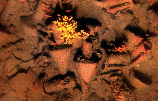DNA in Shipwrecked Jars Reveals Clues to Ancient World