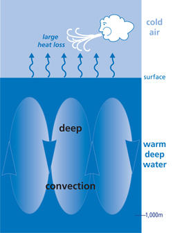 ocean deep convection
