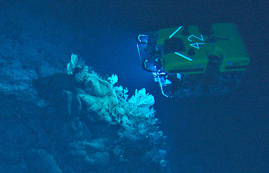 Coral Catastrophe on the Corner Rise Seamounts