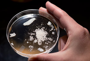 tiny resin beads used to collect chemicals out of microbe broth