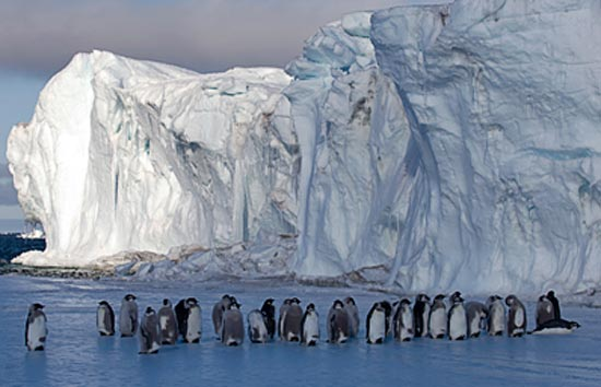 Are Emperor Penguins Marching to Extinction?