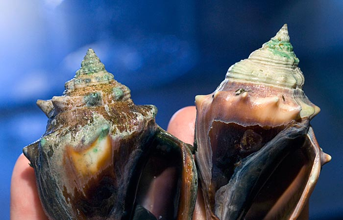 Ocean Acidification: A Risky Shell Game