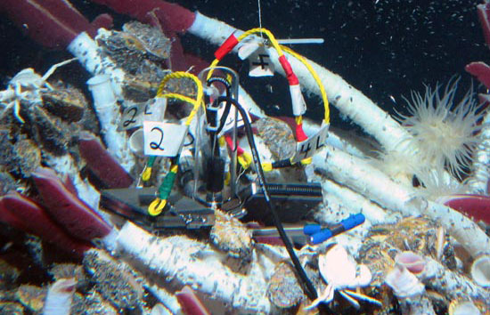 Deep in the Ocean, Tiny Organisms Search for  'Home Sweet Home'