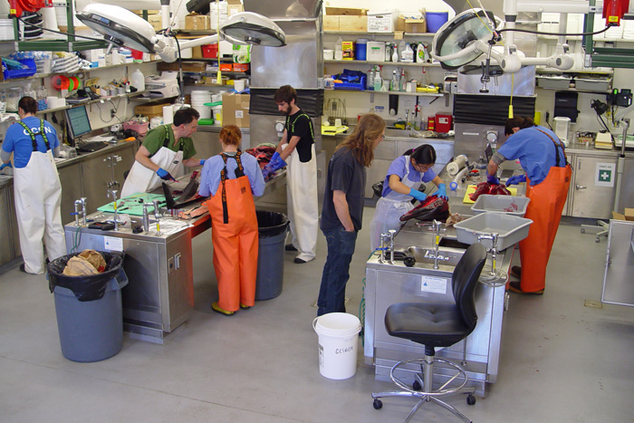 A snapshot of activity in the Marine Research Facility Necropsy Lab