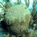 Caribbean Corals and Climate Change