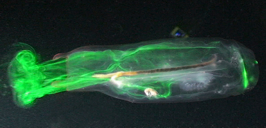 Jet-propelled Jelly