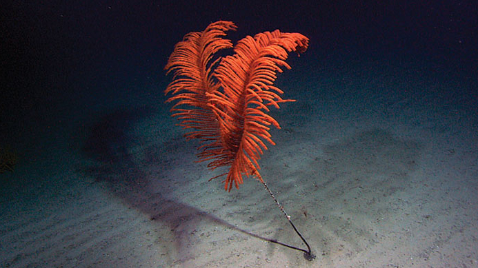 Life on Seamounts
