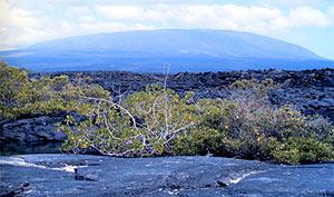 Fernandina volcano's profile