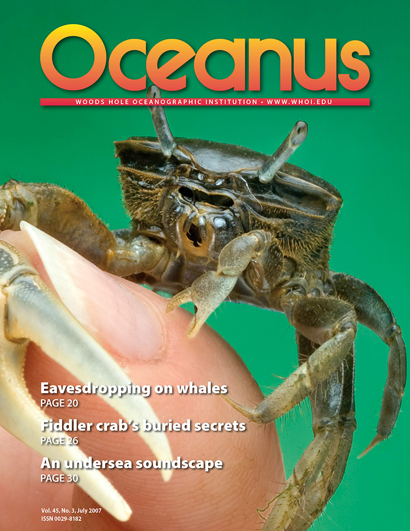 Fiddler Crab's Buried Secrets
