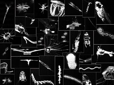 Images of plankton