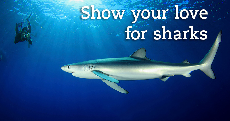 Shark sweepstakes