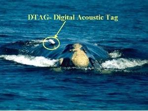 Digital Acoustic Tag