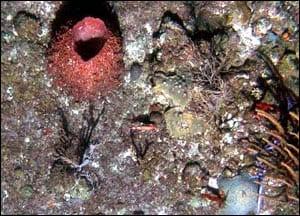 coral3_en_3962.jpg