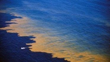 The Growing Problem of Harmful Algae