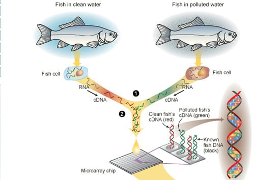 Down to the Sea on (Gene) Chips