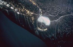 Ocean Life Institute