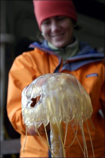 op_050601_jellyfish_en_15362.jpg