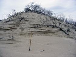 Dune outcrop in Danube Delta