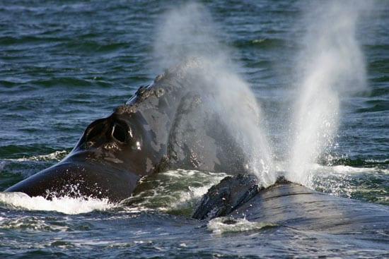 whales_13550.jpg