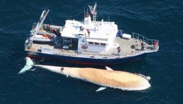 Big Whale, Big Sharks, Big Stink