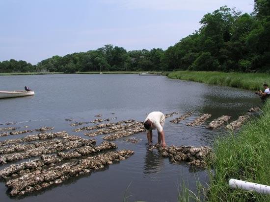 oyster1-en_16151.jpg