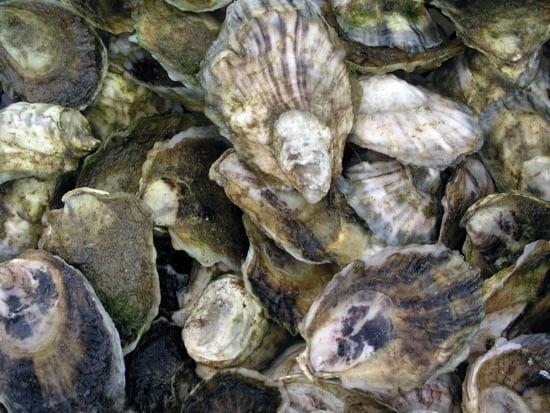 oyster3_16155.jpg