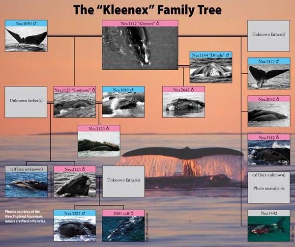 kleenex_18670.jpg