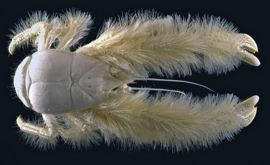crab1n_23528.jpg