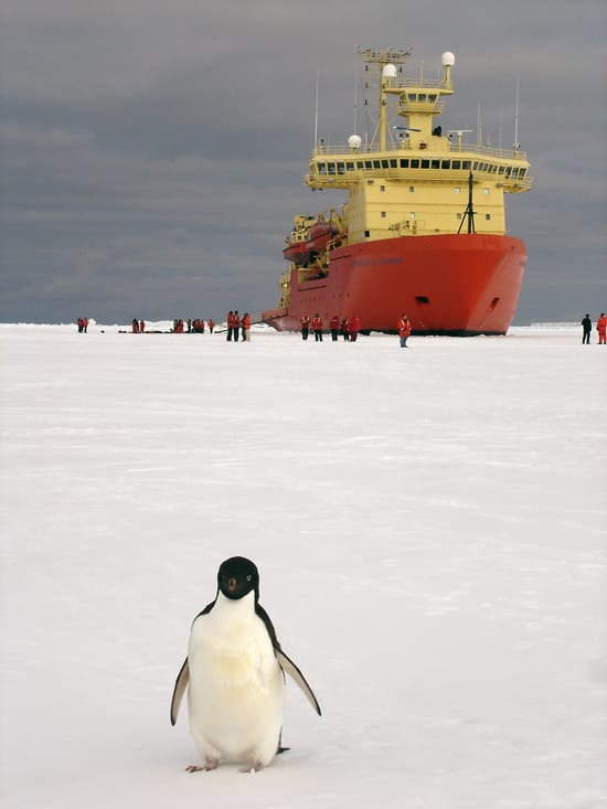 Penguin_250_47302.jpg