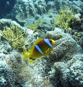 Reef Watch