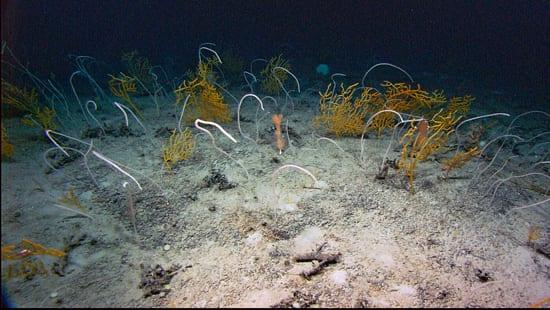 coral2_550_57071.jpg