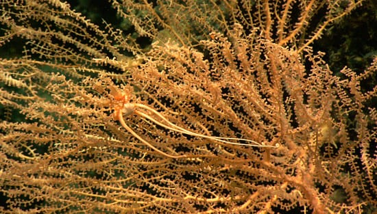 coral3_550_57073.jpg